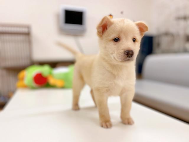 里親 埼玉 犬 【埼玉県】犬の里親になれる譲渡会や保護施設をご紹介